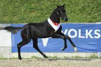 Mehr zu: Salzburger Warmbluttage mit Pferde- & Fohlenmarkt