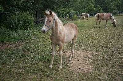Geliebte Verkaufspferde &DT_32